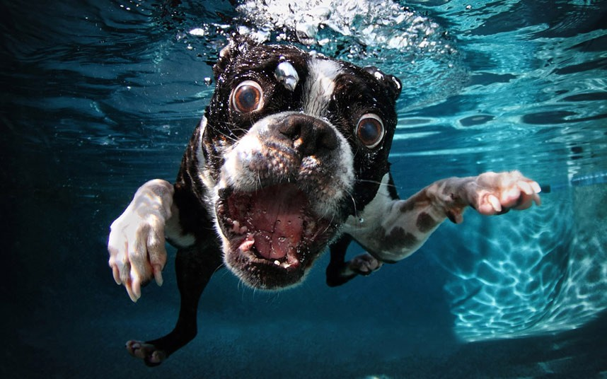 Pet Heaven Incredible Photos Of Dogs Underwater Tails Pet Blog